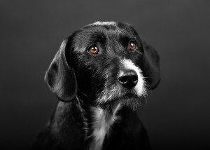 dog_1456309720-300x214